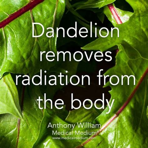 Cilantro Radiation Detox by 471 Best Herbs Oils Images On
