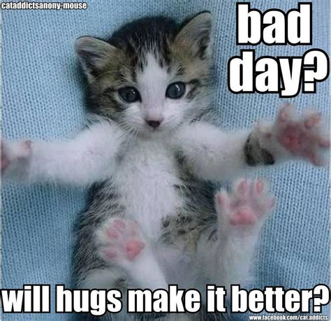 Cat Hug Meme - pic of day snarky sarcastic bish page 5