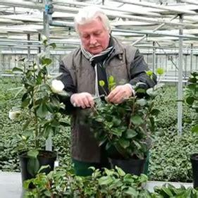 Welches Auto Ist Am G Nstigsten In Der Versicherung by Qvc Keyzers Blumenwelt Keyzers Besondere Pflanzen Und