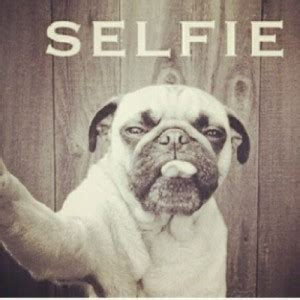pug selfie uplifting friendship quotes with pugs quotesgram