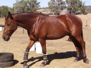 results of adding black oil sunflower seeds to horses