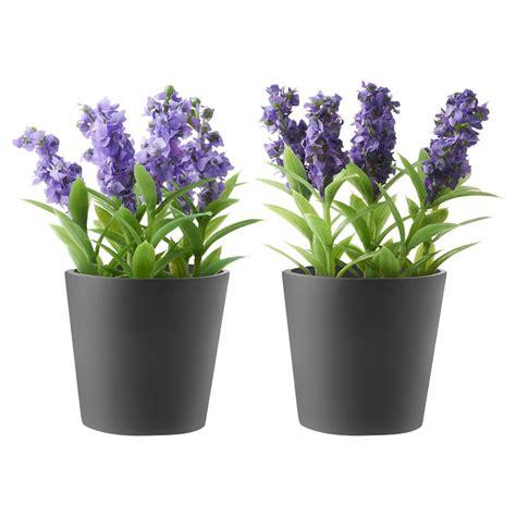 fiori da vaso balcone fiori da balcone le specie pi 249 ed adatte ad essere