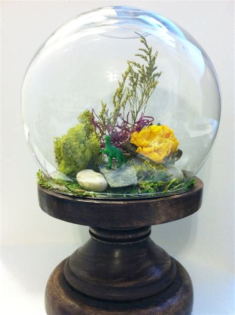 diy terrarium kit glass dome  wood stand