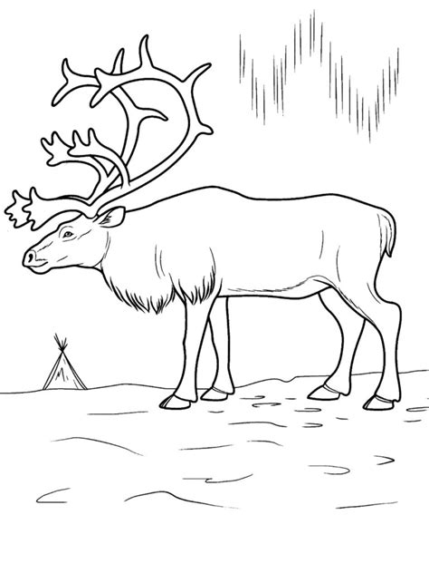 coloring pages arctic animals printable arctic animal coloring pages coloring pages