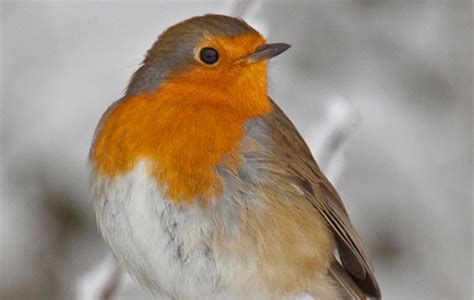 animals associated with christmas