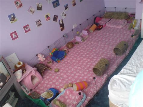 guinea pig bedding ideas huge guinea pig cage the piggies must love it