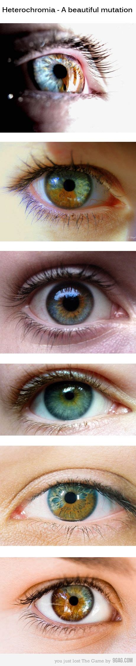 eye color mutations best 20 pictures ideas on what