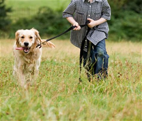 how to two dogs to walk on a leash how can i prepare my child to care for a