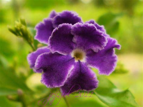 Something Purple - Plant & Nature Photos - Snapshots