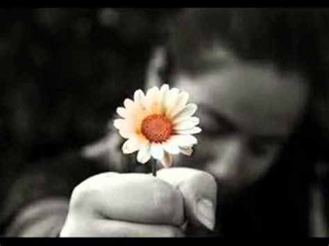 piccolo fiore il mio piccolo fiore bugiardo olmo
