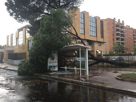 roma ufficio anagrafe maltempo a roma albero crolla nel cortile dell ufficio