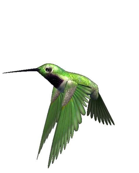 imagenes de aves sin fondo im 225 genes con gifs de p 225 jaros p 225 jaros volando para
