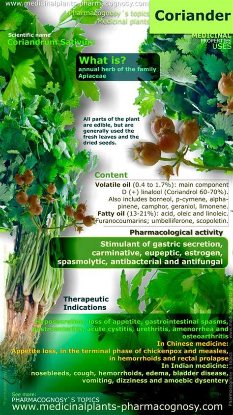 Cilantro Detox Properties by Coriander Benefits Infographic Buy Essential Oils At Www