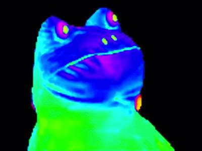 Frog Meme - rainbow frog on make a gif