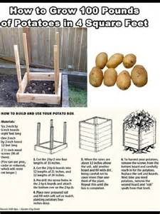 how to grow potatoes outdoors pinterest