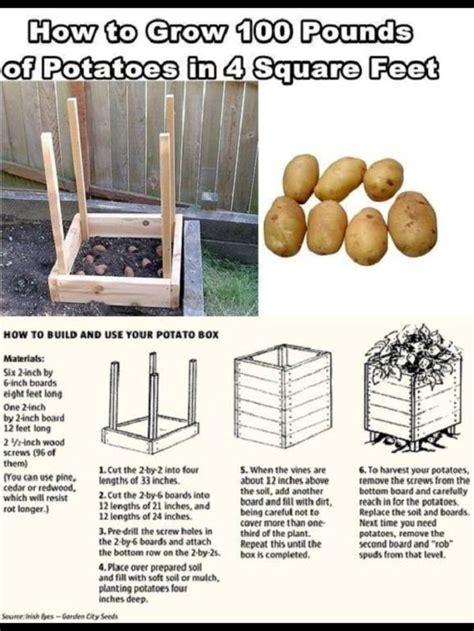 how to grow potatoes outdoors pinterest