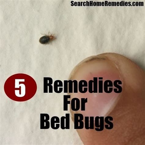 5 herbal remedies for bed bugs herbal remedies