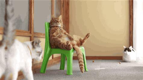 stuhl gif chillin in my chair cat gifs
