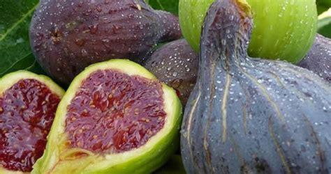alimenti sistema immunitario 5 alimenti per rinforzare il sistema immunitario