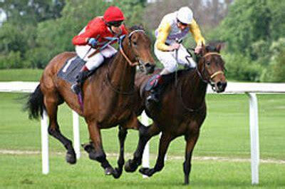 grille d entrainement grille et salaire minimum entra 238 nement chevaux de courses