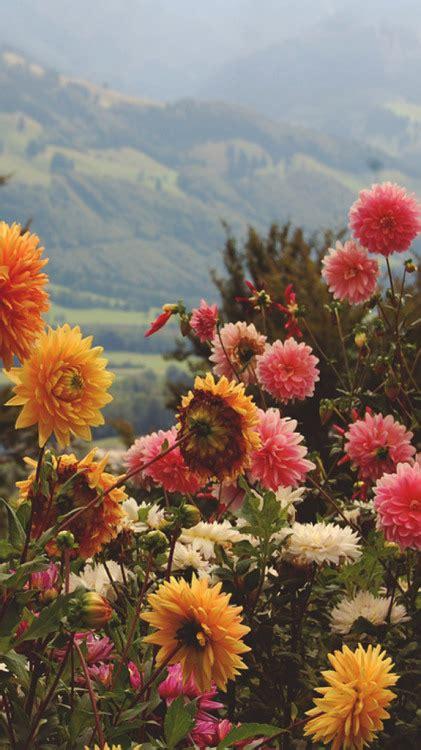 sfondo fiori sfondo fiori