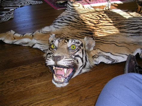 tiger rugs for sale can i get a written appraisal of two pre cites tiger skin rug