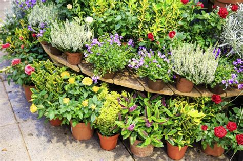 rid  ants slugs   potted plants home