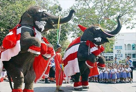 images of christmas elephants christmas and new year in thailand phuket fm radio