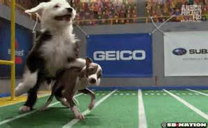 puppy bowl x was better than superbowl xlviii this year