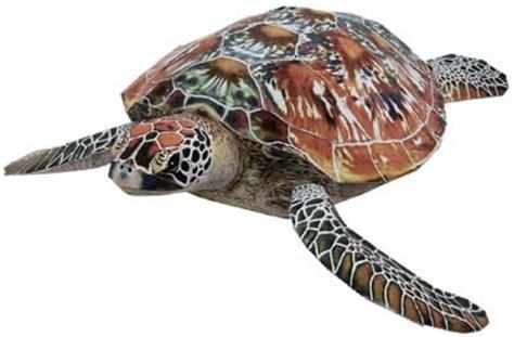 Papercraft Turtle - animal papercraft green sea turtle paperkraft net
