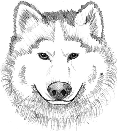 wolf pictures to color print wolf coloring pages theme