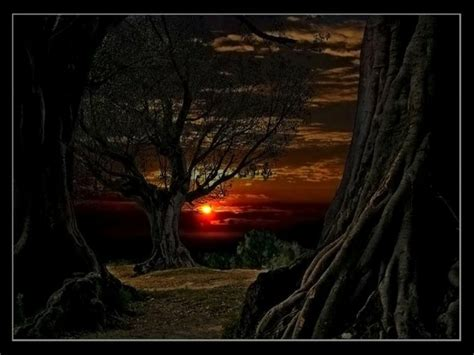 woods sunset wallpaper sunset woods sunset in the woods nature sunsets hd