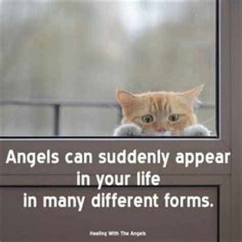 130 Cats Is Way Many by 1000 Images About Chats Humour Cats Humor On