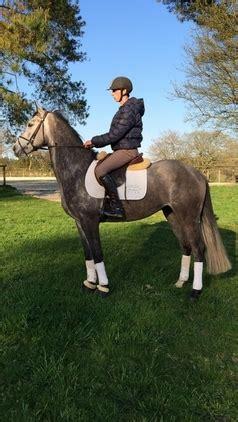 doma de caballos a la caballo iniciado a la doma y al salto en venta en galicia