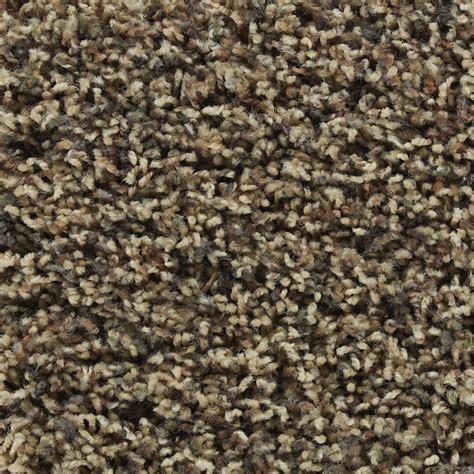 shop stainmaster active family austere hayden frieze indoor carpet at lowes com