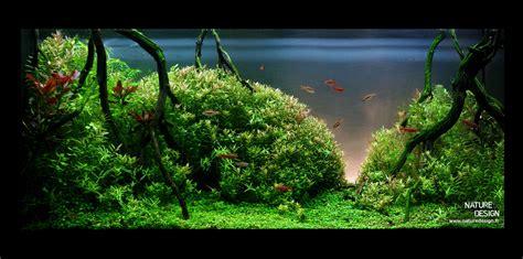 aquarium design galerie mur v 233 g 233 tal et aquariums sur mesure nature design
