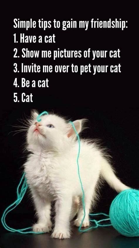 Show Me Your Cat Eye 5 by It Iz Monday So Here Iz Some Kittens Gallery
