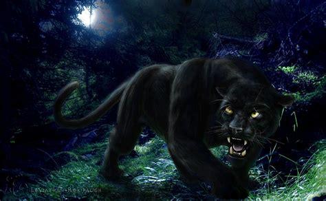 wallpaper black panther panther wallpapers wallpaper cave