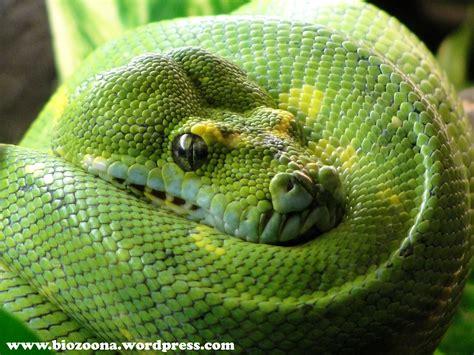 imagenes ojos de reptiles reptiles la biozoona