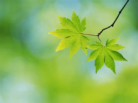 green leaves green wallpaper 22176119 fanpop
