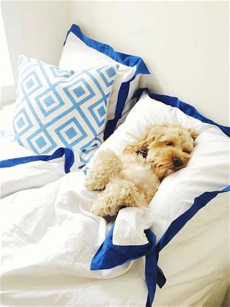 don t want to get out of bed even dogs don t want to get out of bed on mondays 20 pics