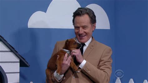 bryan cranston dog movie bryan cranston is a liar but only to get rescue dogs