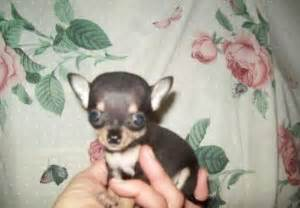 free puppies in utah dogs utah free classified ads