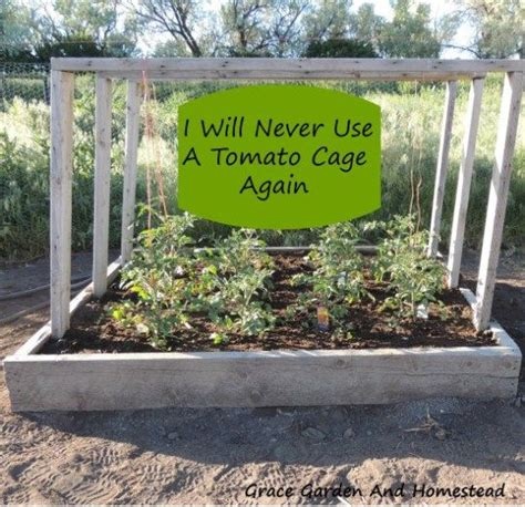Portable Tomato Planter by 17 Best Ideas About Tomato Planter On What Is