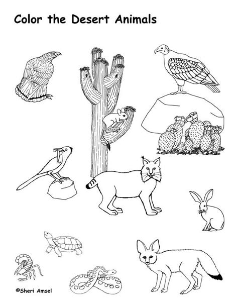 coloring pages of animals in their habitats desert animals coloring page roxaboxen coloring habitats