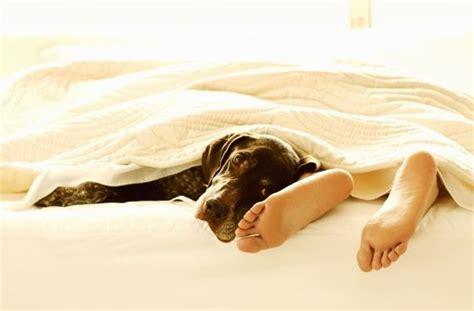 hund zuckt beim schlafen f 252 nf gr 252 nde warum haustiere nicht im bett schlafen
