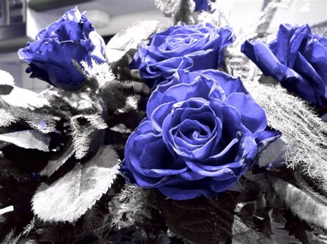 H Ngende Ohrringe Hochzeit by Blaue Kaufen Blaue Kaufen Wo In Der Schweiz
