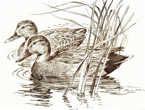 duck boat drawing additionally drawing and painting dozens of pencil and