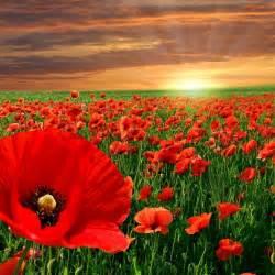 Remembrance day colour techcolour tech