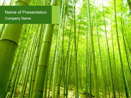 Bamboo Forest Powerpoint Template Backgrounds Id 0000021024 Smiletemplates Com Bamboo Powerpoint Template